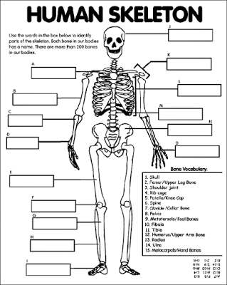 august | 2014 | know-it-all, Skeleton