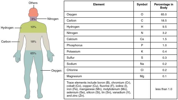 Human Body Elements