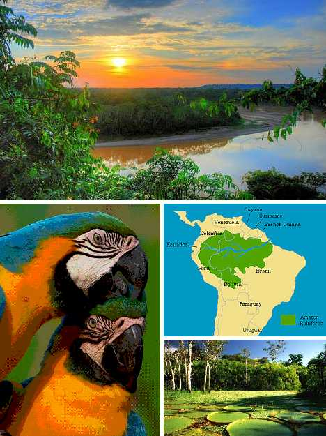 Amazon Rainforest - Brazil