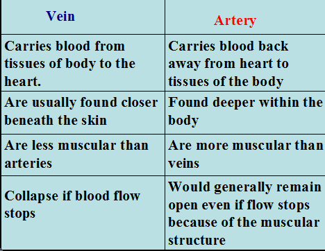 Arteries and Veins - Difference