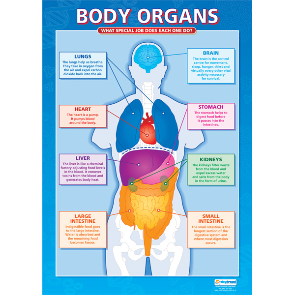 Organs Of The Body – tribeunity.info