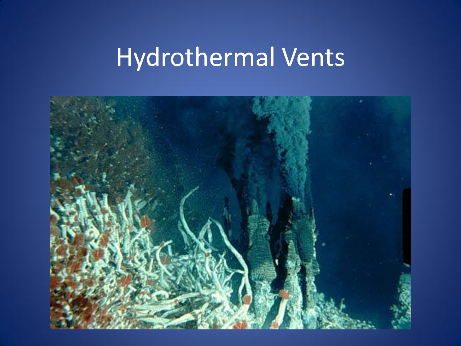 hydrothermal vents chemosynthesis