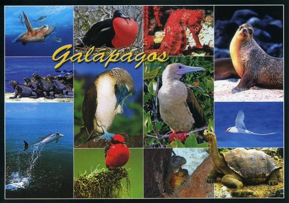 Galapagos Islands and Animals