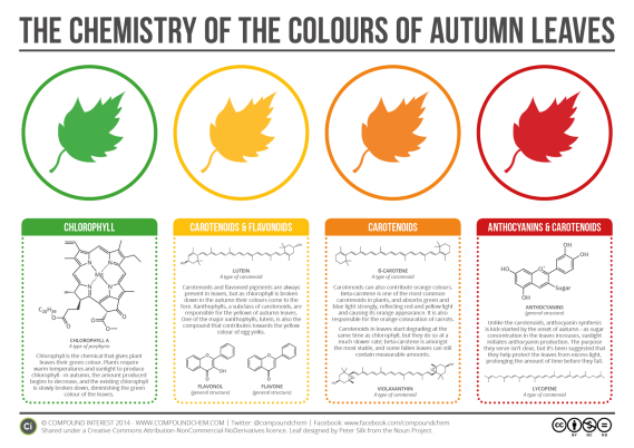 Chemistry of the Colours of Autumn Leaves