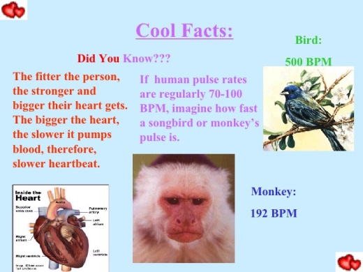 Heart Rate Facts
