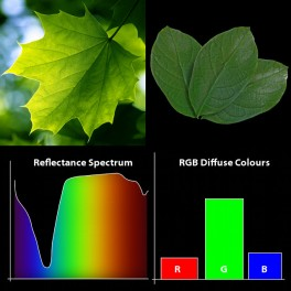 Reflectance Spectrum