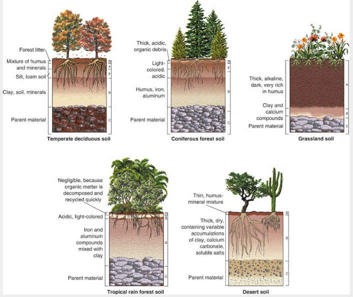 Soil layers know it all for Information about different types of soil