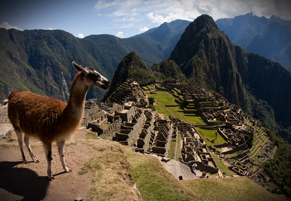Machu Picchu and Llama