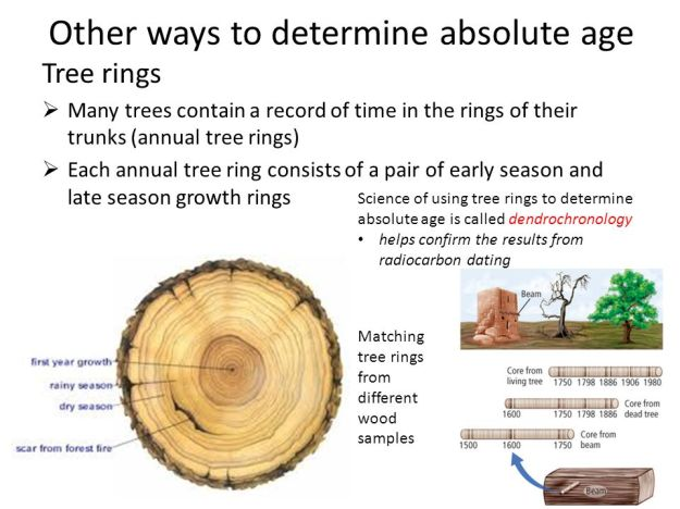 Other Ways to determine absolute age - Tree rings