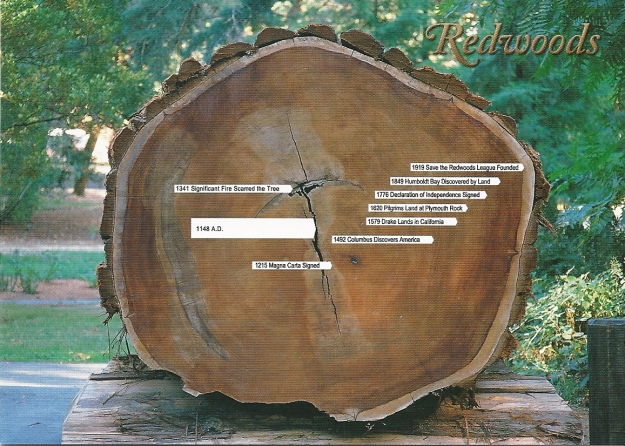 Reedwoods Tree Rings
