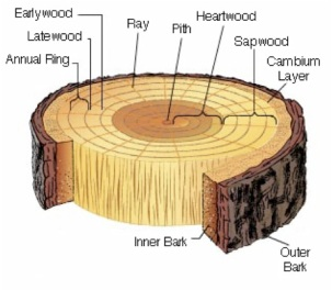Tree-Cross-Section
