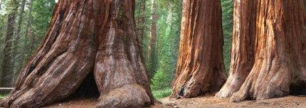 Tree Historical