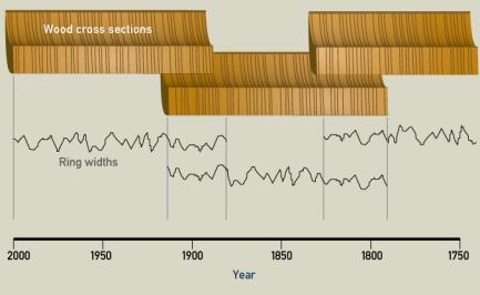 Wood Cross Sections