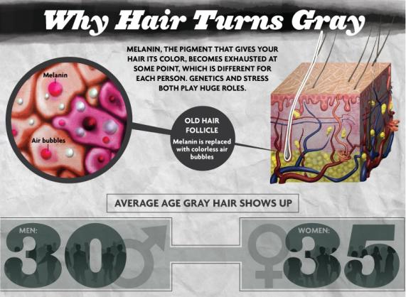Why Hair Turns Gray