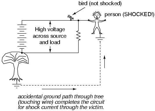 Bird and Person on High Voltage
