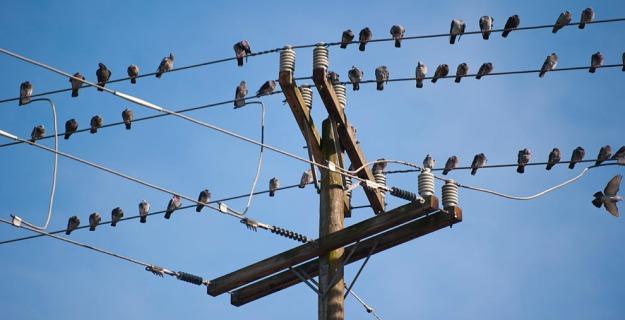 Birds on High Voltage