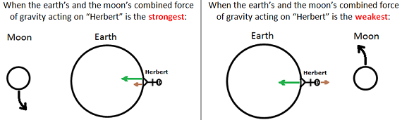 Gravity - Earth and Moon