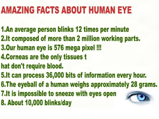 Human Eye Facts