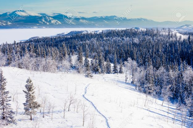 Snow-shoe trail in boreal forest taiga winter wilderness landscape of Yukon Territory, Canada, north of Whitehorse