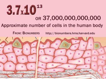37.000.000.000.000 Cells