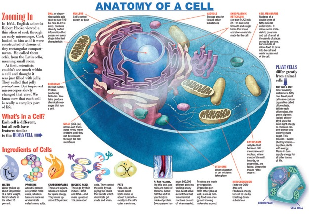 how many cells are in a human body ? | know-it-all, Human Body