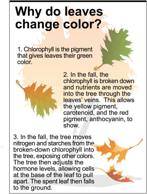why do leaves change color and fall know it all