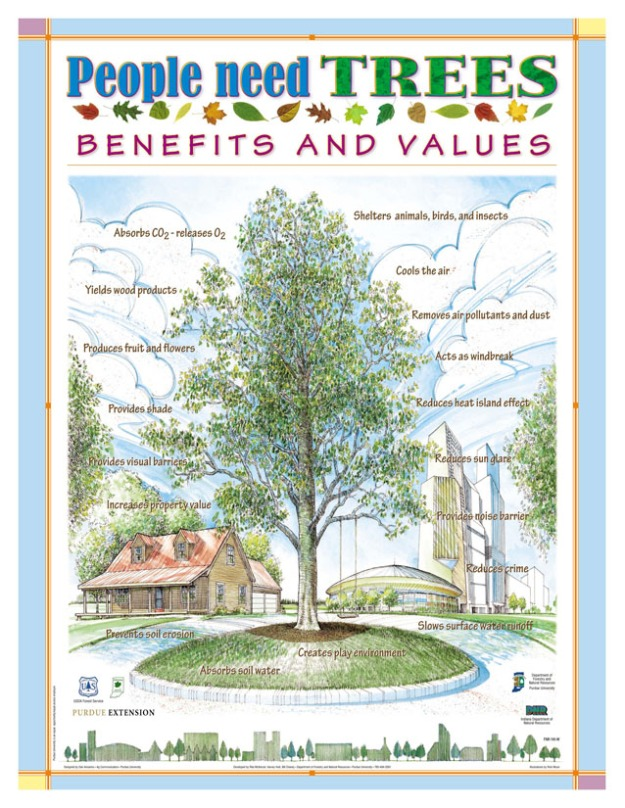 Benefits of Trees poster
