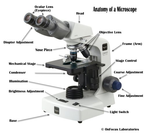 Anatomy of Microscope