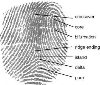 fingerprint_parts