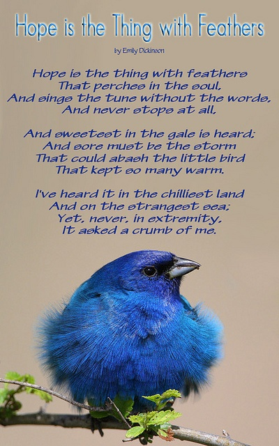 Hope is the Thing with Feathers Poem