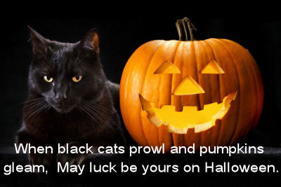 happy-halloween-black-cat-and-pumpkin