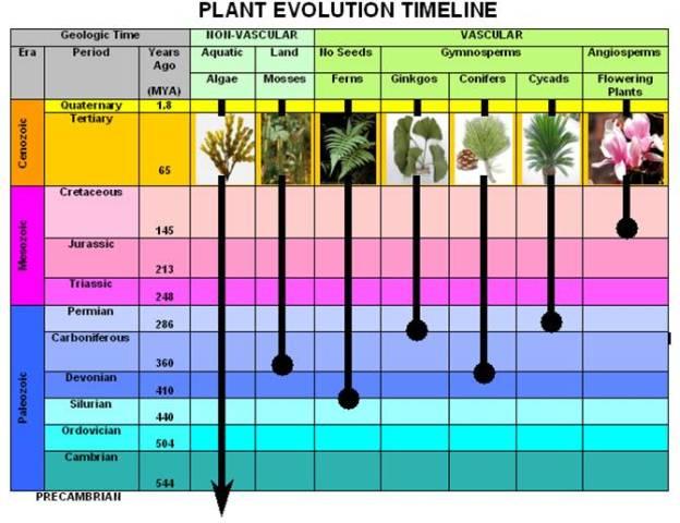 plant-timeline
