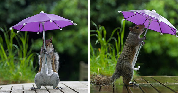 squirrel-umbrella