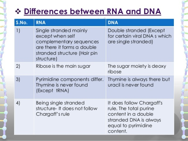Difference between DNA and RNA 1