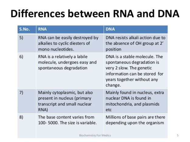 Difference between DNA and RNA 2