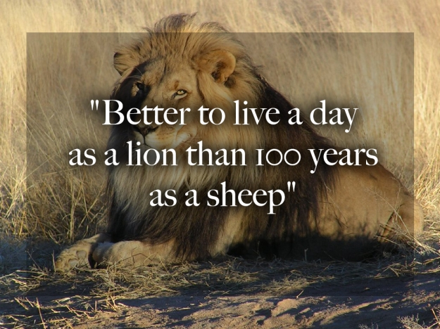 Italian Proverb - Better on day as a lion than a hundred as a sheep