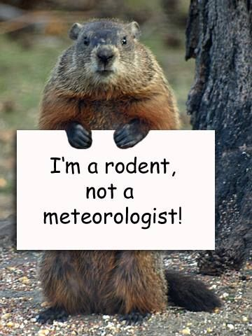 I'm a rodent, not a meteorologist !