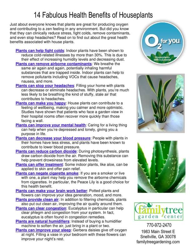 14 Fabulous Health Benefits of Houseplants