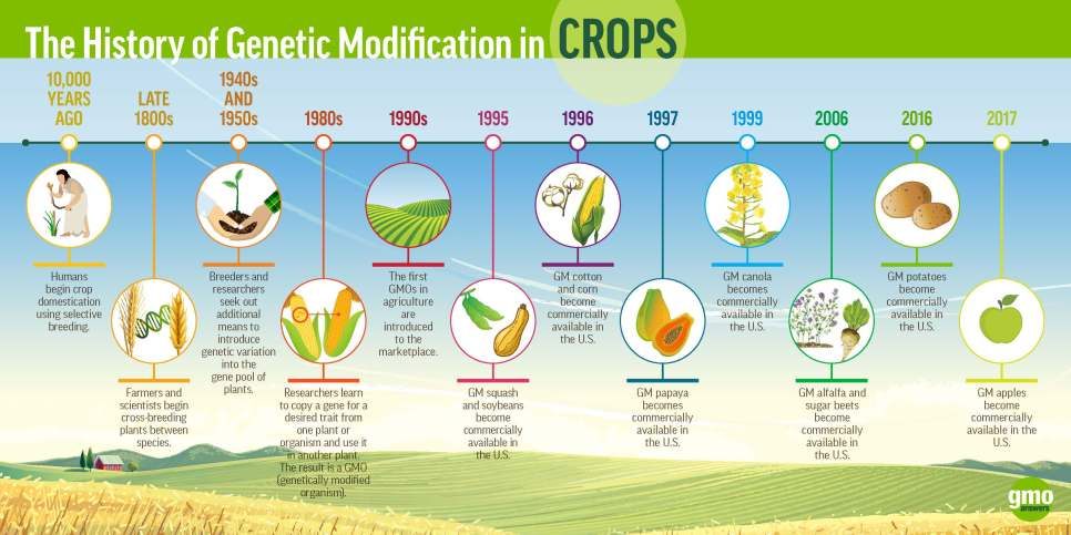 History of Genetic Modification in Crops