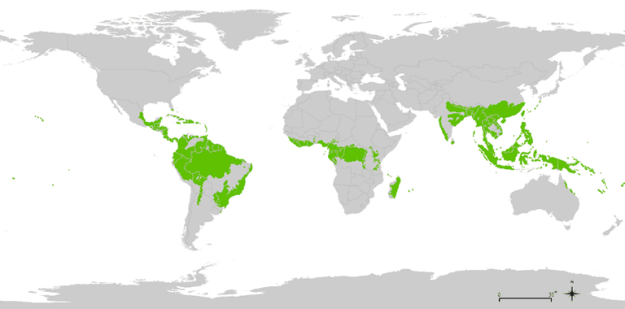 How Many Tropical Rainforests are in the World