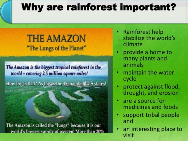 Why are Rainforest Important