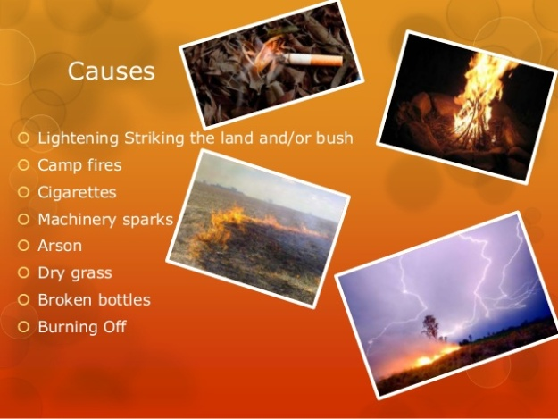 What Causes Bushfires
